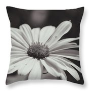 Single Daisy Bw Throw Pillow