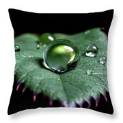 Single Drop Throw Pillow