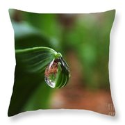 Single Drop Of Rain Water  Throw Pillow