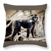Single Macaque Monkey Standing Throw Pillow