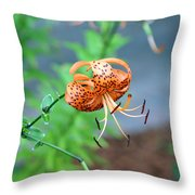 Single Orange And Black Tiger Lily Throw Pillow