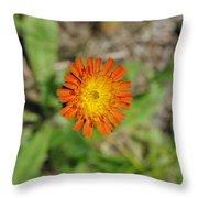 Single Orange Wild Flower Throw Pillow