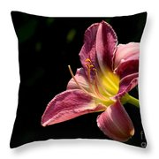 Single Pink Day Lily Throw Pillow
