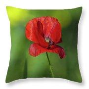 Single Poppy On Green Background Throw Pillow