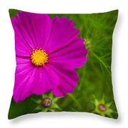 Single Purple Cosmos Flower Throw Pillow