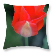Single Red Throw Pillow
