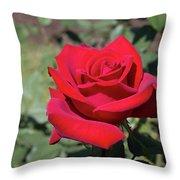 Single Red Rose  Throw Pillow