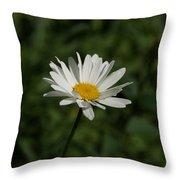 Single Shasta Daisy Bloom Throw Pillow
