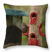 Single Songbird At Feeder Throw Pillow