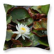 Single Water Lilly  Throw Pillow