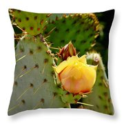 Single Yellow Cactus Bloom 050715a Throw Pillow