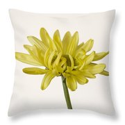 Single Yellow Daisy Throw Pillow