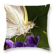Sipping Purple Throw Pillow