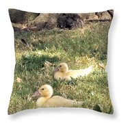 Sitting Ducks Throw Pillow