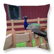 Sitting Peacock Throw Pillow