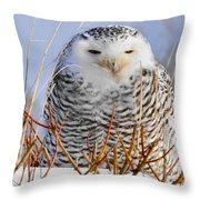 Sitting Snowy Owl Throw Pillow