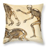 Skeletons Of Man, Ape, Bear, 1860 Throw Pillow