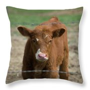 Skeptical Calf Barbed Wire Throw Pillow