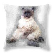 Sketch Of Regal Himalayan Cat - Not Throw Pillow