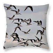 Skimmer Sky Throw Pillow