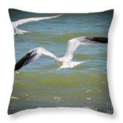Skimmers In Flight Throw Pillow