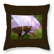 Skipper Butterfly With White And Orange Colors Throw Pillow