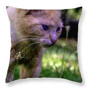 Skippy Feral Cat Portrait 0369b Throw Pillow