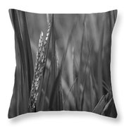 Skn 2913 Yet To Collect The Yield Color Throw Pillow