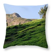 Skn 6662. Dominating. Color Throw Pillow