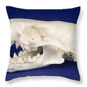 Skull Of A River Otter Throw Pillow