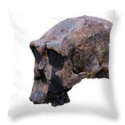 Skull Of Homo Erectus Throw Pillow