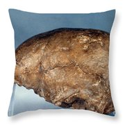 Skull Of Peking Man Throw Pillow