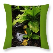 Skunk Cabbage Beauty Throw Pillow