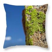 Sky Lichen Throw Pillow