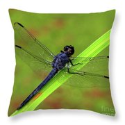 Slaty Skimmer Dragonfly Throw Pillow