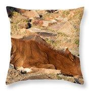 Sleeping Colt Throw Pillow