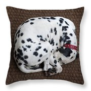 Sleeping Dalmatian II Throw Pillow