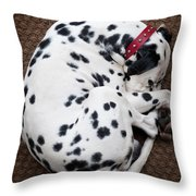 Sleeping Dalmatian Throw Pillow