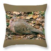 Sleeping Dove Throw Pillow