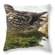 Sleeping Ducks. Throw Pillow