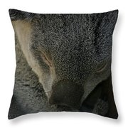 Sleeping Koala Bear Throw Pillow