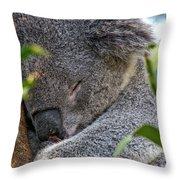 Sleeping Koala - Canberra - Australia Throw Pillow