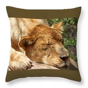 Sleeping Lioness  Throw Pillow