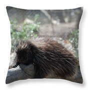 Sleeping Porcupine With Lots Of Quills Throw Pillow
