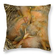 Sleeping Robins Throw Pillow
