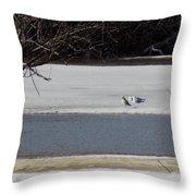 Sleeping Seagulls Throw Pillow