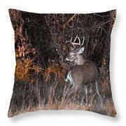 Sleepy Buck Throw Pillow
