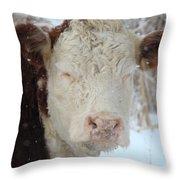 Sleepy Winter Cow Throw Pillow