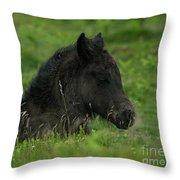 Sleepy Dartmoor Foal Throw Pillow