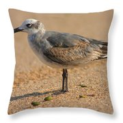 Sleepy Gull Throw Pillow